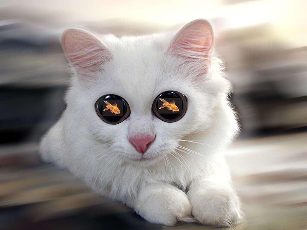 Смешные раскраски с кошками