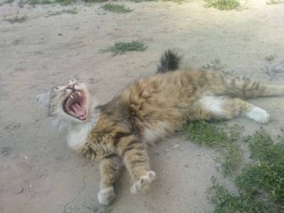 Книги смешные кошки смешные кошки
